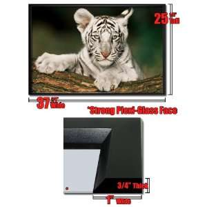 Framed White Tiger Cub Poster Wild Life Animal Fr33432