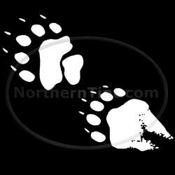 Bear hunting vinyl wall art car truck decal sticker 067