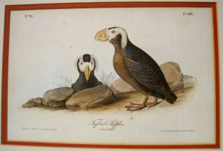 John James Audubon Tufted Puffin Lithograph 1844