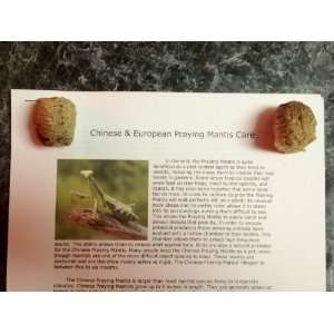 Praying Mantis Egg Cases: Everything Else