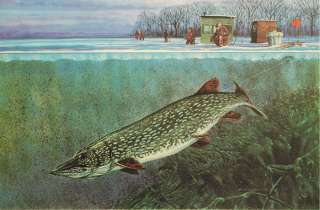 Scott Zoellick Tip UP S/N Ice Fishing Northern Pike