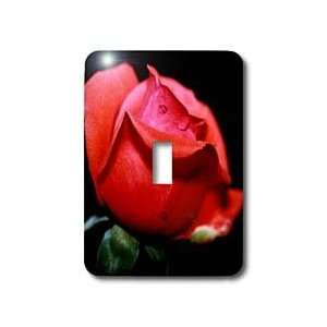 Photography   Red Roses   Red Rose   rose, roses, red, love, heart