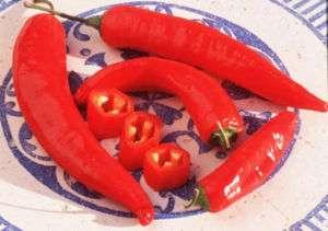 Guajillo Chili Pepper Jumbo Pack 60 Seeds No Added S&H