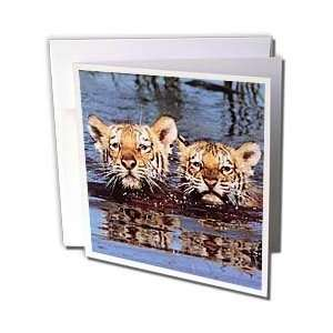 Wild animals   Tiger Cubs   Greeting Cards 6 Greeting
