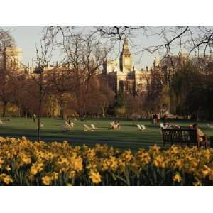 Daffodils in St. Jamess Park, with Big Ben Behind, London