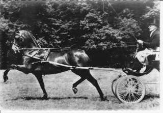 CIRCA 1960 HACKNEY SHOW HORSE POSTCARD RPPC   SULKY CART DRIVER